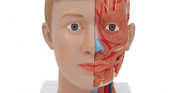 New products in Anatomical Models