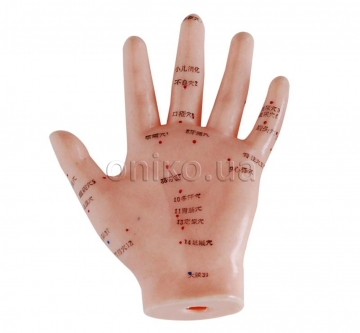 Hand Acupuncture Model, 13 cm