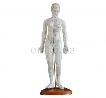 Acupuncture model 48 cm, female